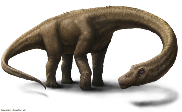 An artist's rendering of the dinosaur Dreadnoughtus schrani in life. Dreadnoughtus had a 37-foot-long neck, 30-foot tail, and weighed an estimated 65 tons, making it the most massive land animal whose size can be accurately calculated. In life, Dreadnoughtus was an herbivore that likely spent much of its life eating massive quantities of plants to maintain its enormous body size. Credit: Jennifer Hall